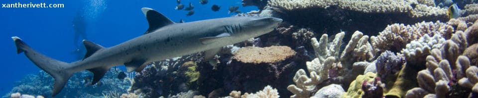 Wreck Reef_credit Xanthe_Rivett_Header jpg