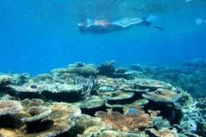 Diver on reef-J&J Thorsborne