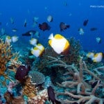 Osprey_Reef_Coral_Sea_XR-13