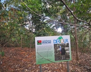 Trees at Dertour sign Nov2012 small