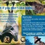 Even if you don't like bats...