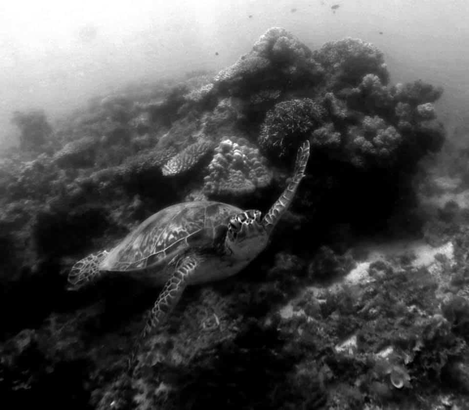 Great Barrier Reef World Hertitage In Danger Cafnec