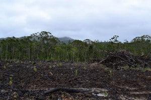 Deforestation400