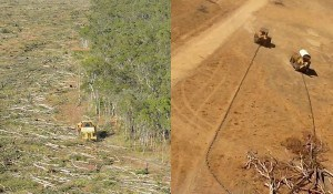 This is what land clearing in Queensland looks like: (Left: Clearing at Olive Vale, Cape York. Right: Clearing at Strathmore Station, North Queensland.) Image courtesy The Wilderness Society