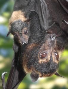 Easter Bat Chats 2016