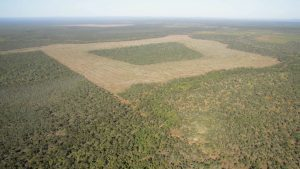 OLive Vale 6 (credit Kerry Trapnell & TWS) Land clearing queensland