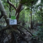 Save the Airport Mangroves