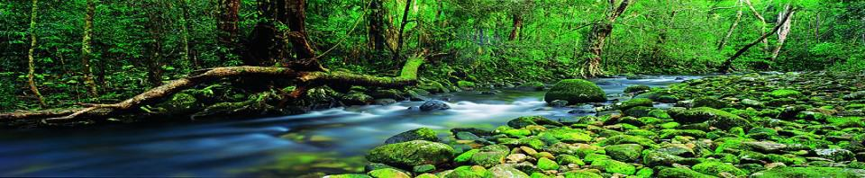 Conservation Sector Consultation Workshop on Wet Tropics Plan Review