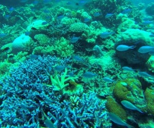 Biodiversity in the Great Barrier Reef is threatened by dredging expansion projects along the Qld coast. Photo (c) Josh Coates