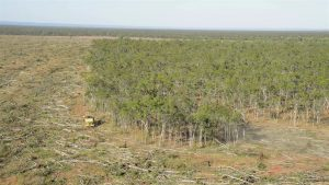Land clearing Queensland