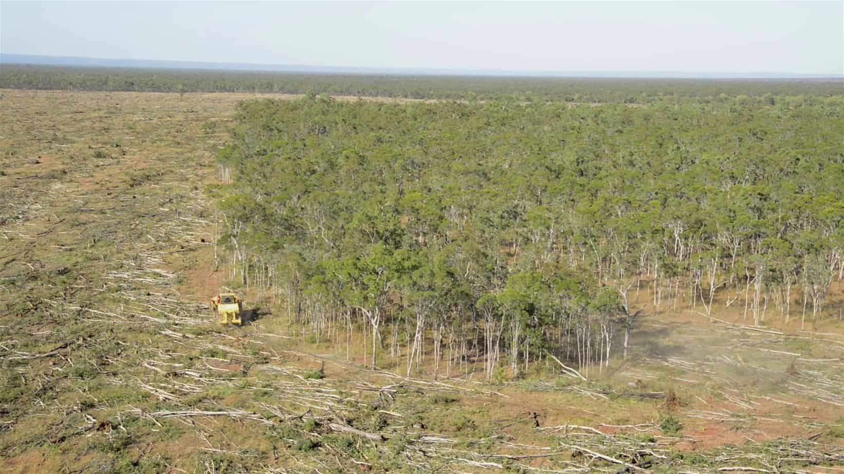 Tree Clearing Laws (Qld)