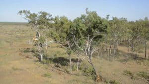 Photo credit: Kerry Trapnell, The Wilderness Society land clearing queensland